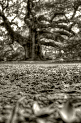Angel Oak Live Oak Tree Art Print by Dustin K Ryan