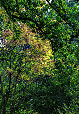 Photograph - Autumn Trees  by Robert Ullmann