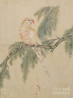 Catch Painting - Birds Of Japan In The 19th Century by Celestial Images