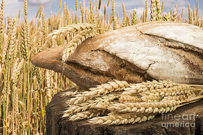 Photograph - Bread And Wheat Cereal Crops. by Deyan Georgiev