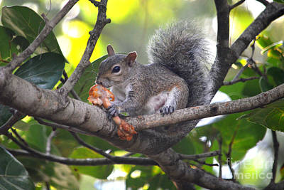 Photograph - 8- Buffalo Squirrel by Joseph Keane