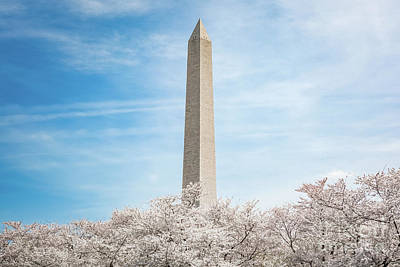 Science Collection - Cherry Blossoms at the Washington Monument by Leslie Banks
