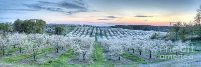 Festival Photograph - Cherry Blossoms In Traverse City by Twenty Two North Photography