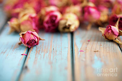 Photograph - Dried Roses by Kati Finell