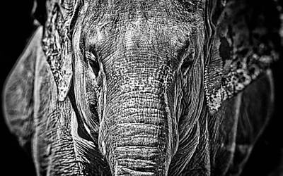 Poster Mixed Media - Elephant Collection by Marvin Blaine