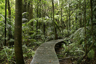 Chemical Glassware - Forest boardwalk by Les Cunliffe