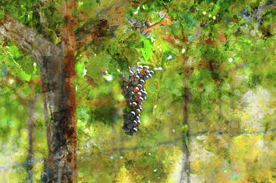 Winery Digital Art - Grapes On The Vine by Brandon Bourdages
