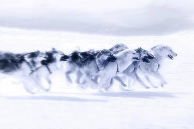 Huskies Photograph - Huskies In Ilulissat, Greenland by Joana Kruse