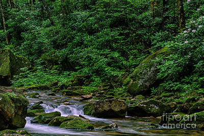 Photograph - Kens Creek Cranberry Wilderness by Thomas R Fletcher