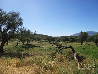Photograph - Olive And Almond Trees Near Lanjaron by Chani Demuijlder