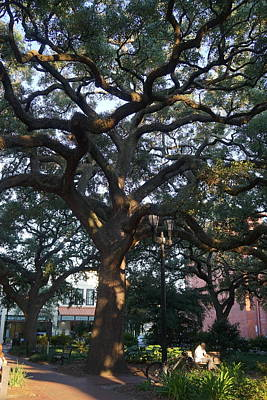 Photograph - Savannah Mighty Oak by Laurie Perry