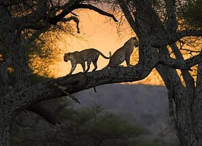 Sunset Digital Art - Leopard by Super Lovely