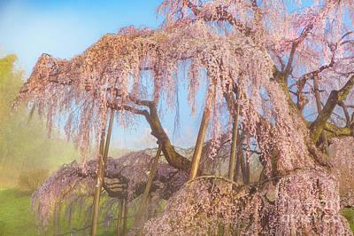 Photograph - Miharu Takizakura Weeping Cherry08 by Tatsuya Atarashi
