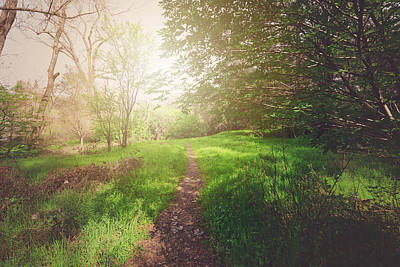 Hike Photograph - nature Trail with Retro Style Filter Applied by Brandon Bourdages