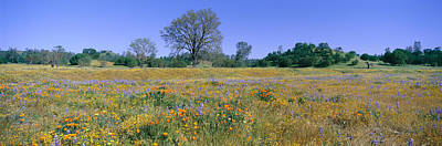 Rural Landscapes Photograph - Panoramic View Of Spring Flowers by Panoramic Images