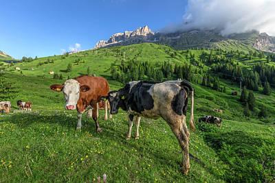 Photograph - Passo Di Sella - Dolomiti by Joana Kruse