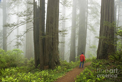 Photograph - Redwood Forest by Inga Spence