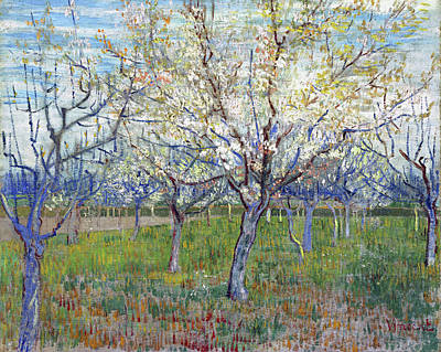 Painting - The Pink Orchard by Vincent van Gogh