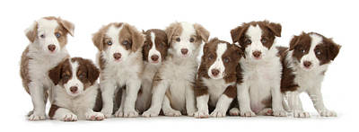 Photograph - 8 Up Pups by Warren Photographic