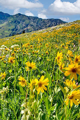 Photograph - Wasatch Mountains Utah by Douglas Pulsipher