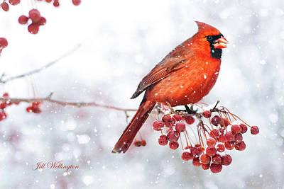 Lady Bug - Winter Birds by Jill Wellington