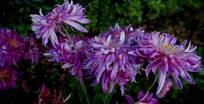Photograph - Love Flowers by Baljit Chadha