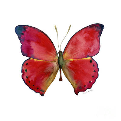 White Background Painting - 83 Red Glider Butterfly by Amy Kirkpatrick