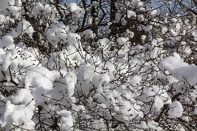 Studio Grafika Patterns - Snow and Branches by Robert Ullmann