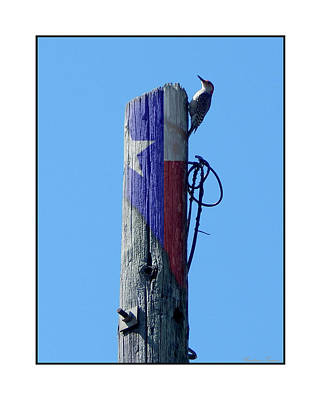 Photograph - #8667 Woodpecker by Barbara Tristan