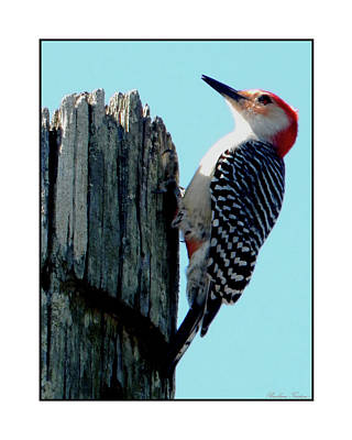 Photograph - #8670 Woodpecker by Barbara Tristan