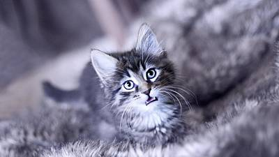 Cats Digital Art - Cat by Super Lovely
