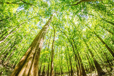 Photograph - cypress forest and swamp of Congaree National Park in South Caro by Alex Grichenko