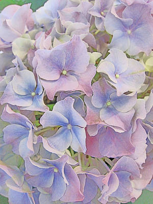 Passiflora Digital Art - Flower Carpet. by Andy Za