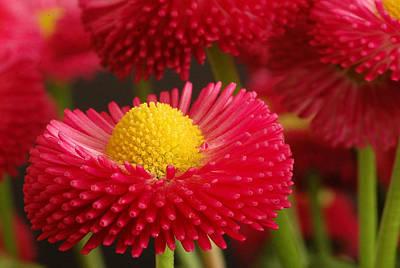 Floral Digital Art - Flower by Maye Loeser