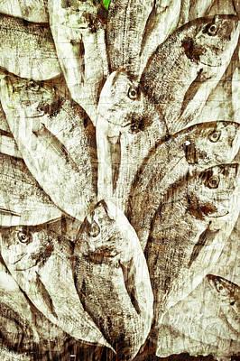Fresh Fish Art Print by Tom Gowanlock