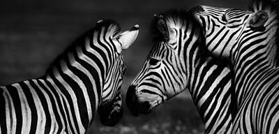 Photograph - Group Of Zebras by Werner Lehmann