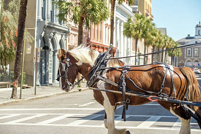 Photograph - Historic Charleston South Carolina Downtown Scenery by Alex Grichenko