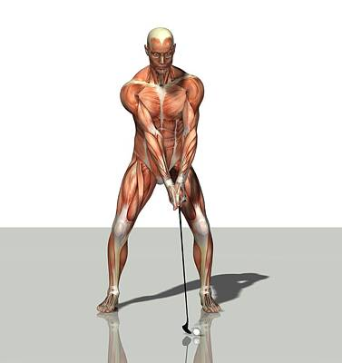 Golf Photograph - Male Muscles, Artwork by Friedrich Saurer