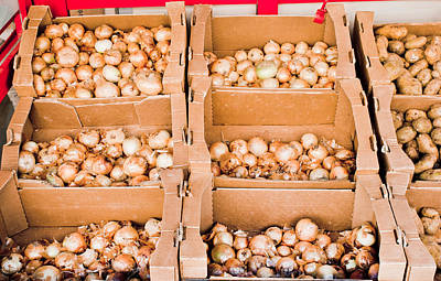 Food Stores Photograph - Onions by Tom Gowanlock