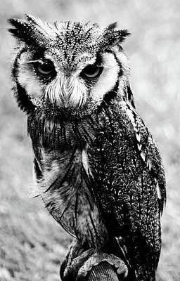Photograph - Portrait Of Bird Of Prey  by Cliff Norton