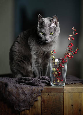 Animal Paintings David Stribbling Royalty Free Images - Russian Blue Royalty-Free Image by Nailia Schwarz