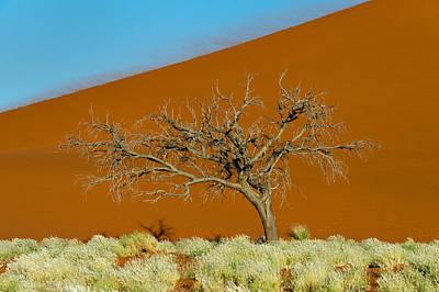 Bare Trees Photograph - Sand Dune, Sossusvlei, Namib Desert by Panoramic Images