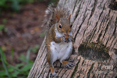 Photograph - 9- Squirrel by Joseph Keane