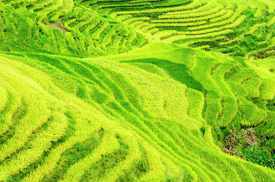 Photograph - The Terraced Fields Scenery In Autumn by Carl Ning