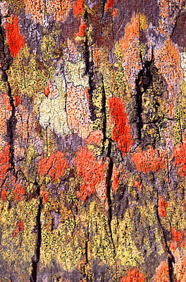Vibrant Color Photograph - Tree Bark by John Foxx