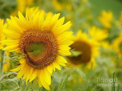 My Bed Photograph - #933 D968 Colby Farm Sunflowers Heart Shaped Love by Robin Lee Mccarthy Photography