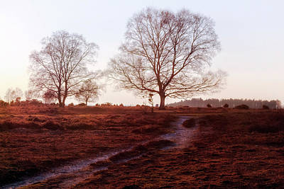 New Forest - England Art Print by Joana Kruse