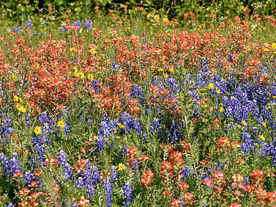 Photograph - A Atch Of Texas Wildflowers by Charles McKelroy