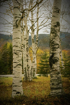 Photograph - A Autumn Photo Of A Small Stand Of White Birch Trees. by Rusty R Smith