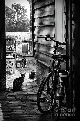 Markermeer Photograph - A Backstreet With Cats And Bicycle In Marken B/w by RicardMN Photography